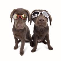 2-pups