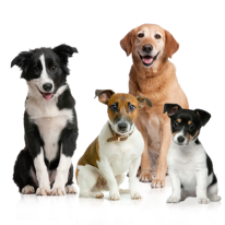 4-dogs