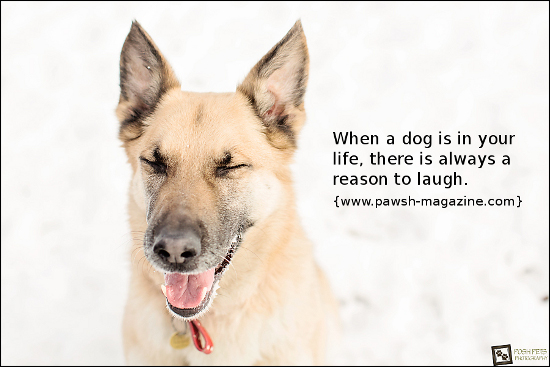 dog-quotes-laughter